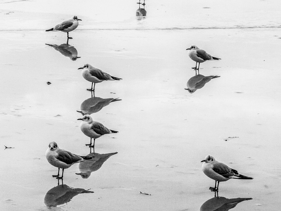 picture of seagulls on ice