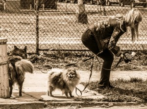 woman cleaning up after her dog