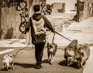 0122dog walker - NY-2013