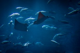Impressions from outside the Dubai Aquarium - two sting rays