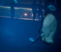 Impressions from outside the Dubai Aquarium - sting ray and silhouettes of visitors in background