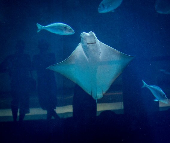 Impressions from outside the Dubai Aquarium - Sting Ray