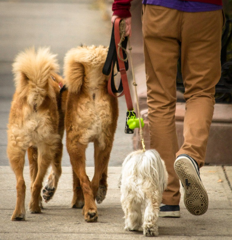 Street Shot: Bottoms of three dogs and their walker