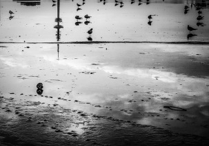 Monchrome photograph - reflections on frozen river - Hamburg